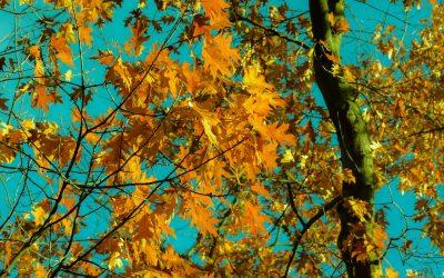 Change-of-Season-Preparedness Checklist